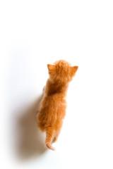 Gatito decidido