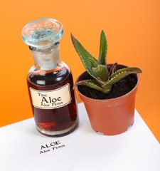 Aloe Ferox plant, extract and sheet