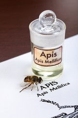 Apis Mellifica sheet, the bee and poison extract