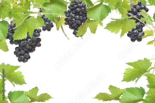 Fresh grapevine frame with black grapes,