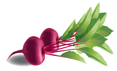 Vector of a couple of beetroots