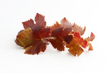 Feuille de vigne couleur automne