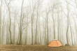 tourist tent stands in the misty forest