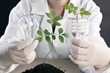 Scientist holding seedling in laboratory