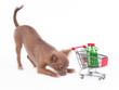 Pet shop concept - chihuahua puppy with shopping cart
