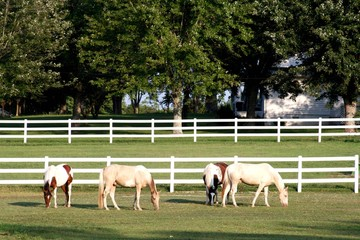 Four horses in pasture with white fence