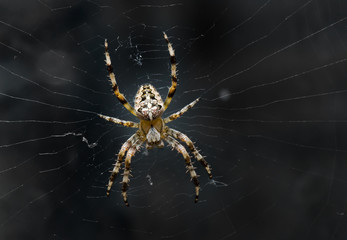 Night image of very dreadful spider on his net in the darkness.