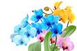 Orchideen 97