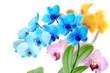Orchideen 99