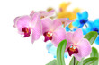 Orchideen 103