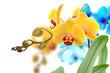 Orchideen 105