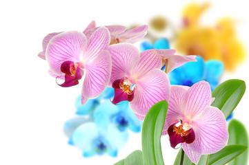 Orchideen 102