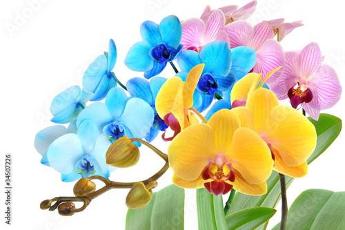 Orchideen 98