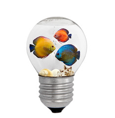Fishes and seashells in bulb, isolated on white