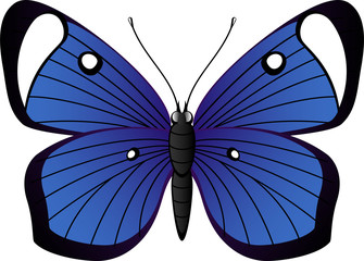 Beautiful tropical butterfly