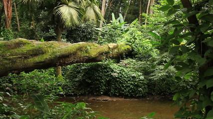 Floresta, Brasil