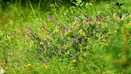 Пчелы работают на цветах