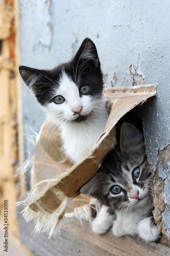 Two funny homeless playful kitten