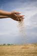 grain and hand - 34541452