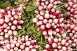 Bottes de radis au marché