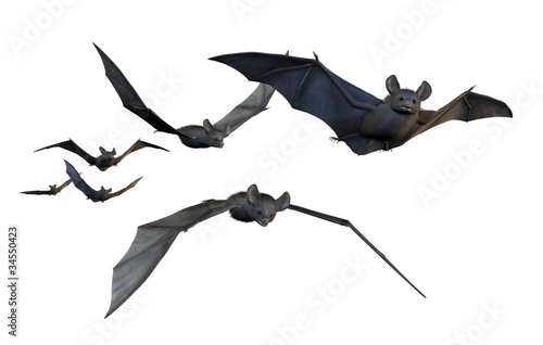 Bats Flying - on White