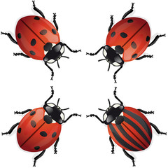 coccinelle différence