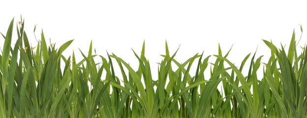 green grass background ready for your design
