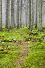 Hiking trail through a forest
