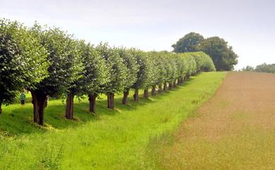 Baumreihe am Wiesenrand