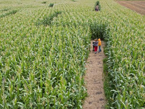 Leinwanddruck Bild Maislabyrinth