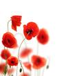 Fototapete Landesgrenzen - Close-up - Blume