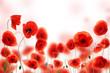 Fototapete Isoliert - Natürlich - Blume