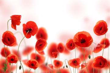 Poppy field © Jag_cz