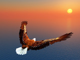 Fototapety Sea Eagle