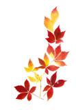 Feines Arrangement aus Herbstblättern