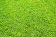 Grasfläche q.
