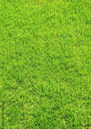 Grasstück h.