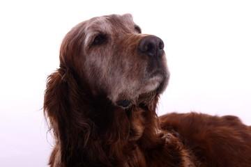 Hund hoch schauend