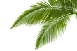 Palm leaves - 34603693
