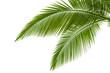 Leinwanddruck Bild - Palm leaves
