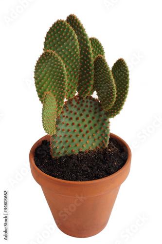 Kaktus im Detail mit Tontopf