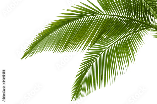 Deurstickers Bomen Palm leaves