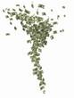 Financial Tornado