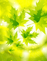 Vector shiny background with leaves