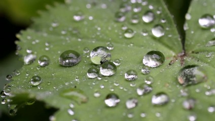 rain on leaf with raindrops