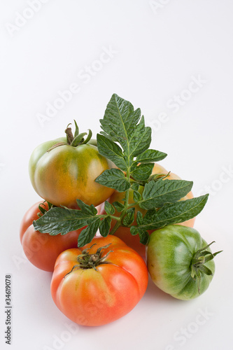 Tomatoes, fresh from the garden
