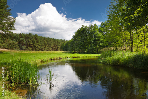 Summer view of the river in forest