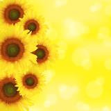 Fototapeta kwiatach - kwitnąć - Metal