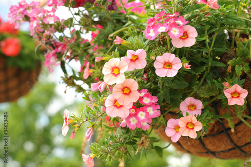 Fotobehang Purper Blumen 225