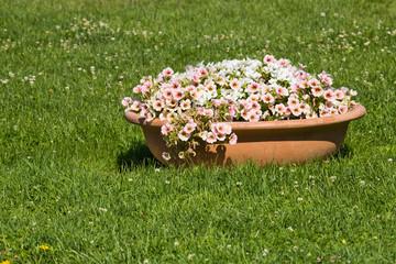 Vaso con fiori nel prato